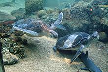 Zante-Turtles