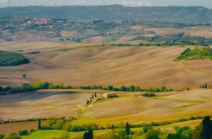 Tuscany Field - Smaller